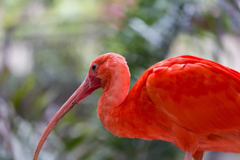 Bird SanctuariesNear Delhi